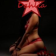 Dahlia's Avatar
