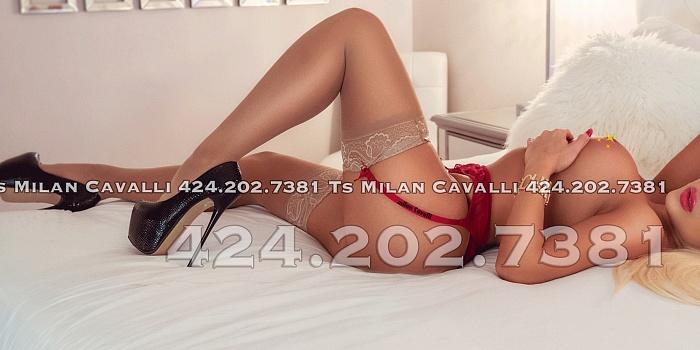 Milan Cavalli's Cover Photo