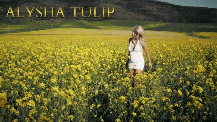 Alysha Tulip